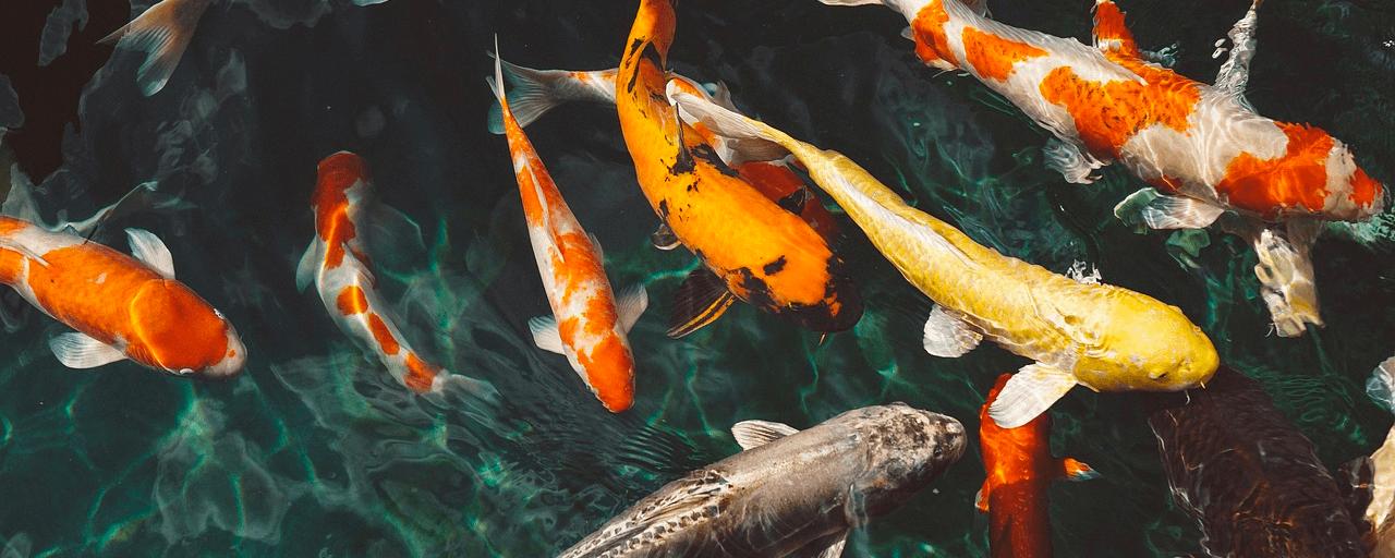 рыбы сонник