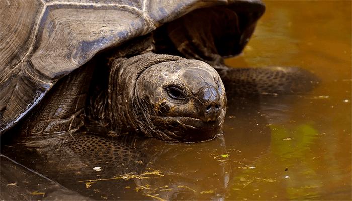 Черепаха во сне сонник ванги. К чему снится Черепаха во сне сонник ванги