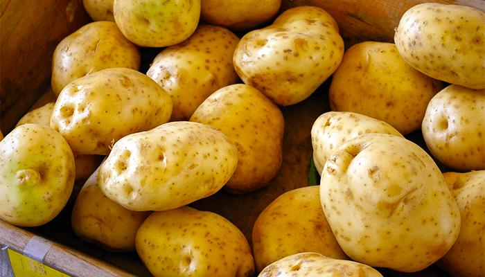 К чему снится копать картошку? Толкование сна с посадкой и сбором картофеля