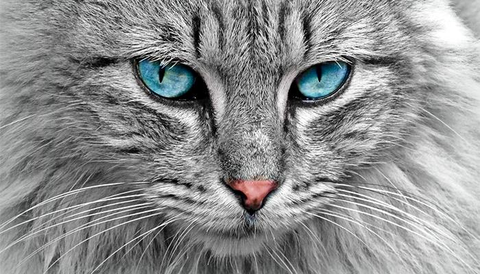 К чему снится кошка с котятами - сонник, толкование сна