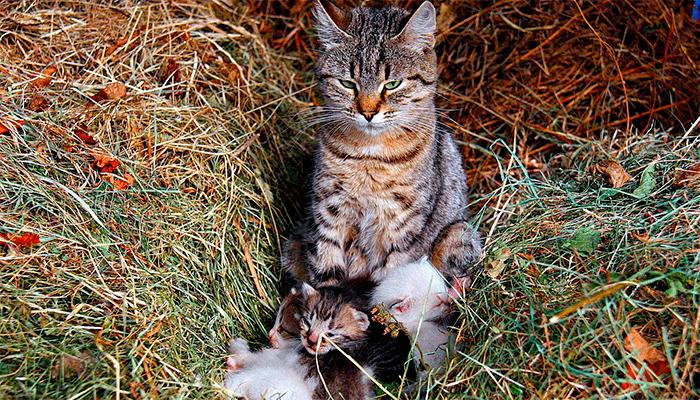 К чему снится кошка с котятами — сонник, толкование сна