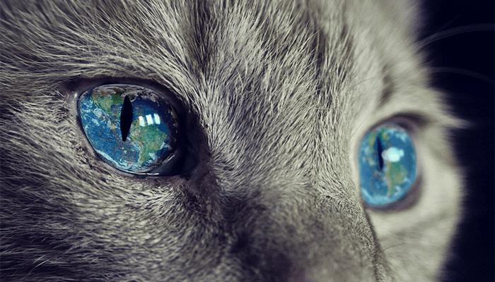 К чему снится много кошек? Толкование сна с целой сворой кошаков
