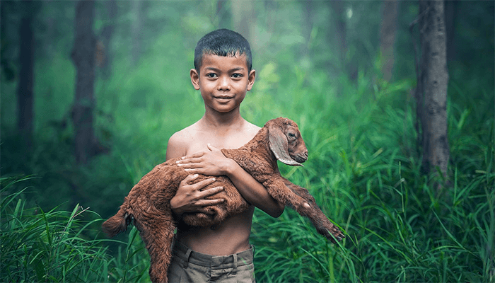К чему снятся козы? Толкование сна с козой по сонникам