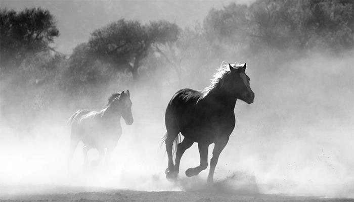 К чему снятся лошади женщине? Подробное толкование сна