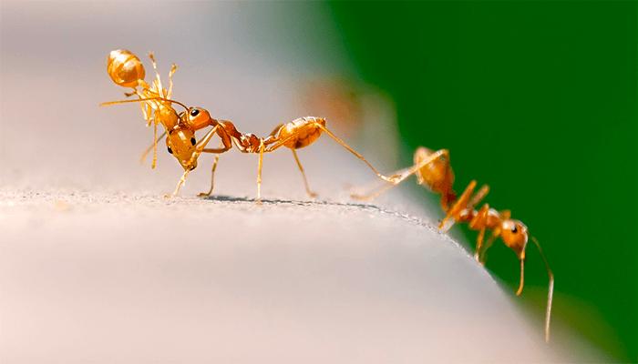 К чему снится муравей? Толкование снов с муравьями по сонникам