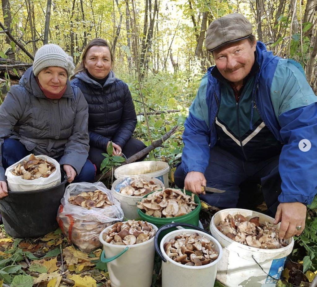 Собирать грибы во сне - к чему снится?