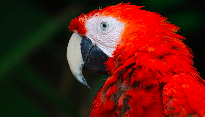 К чему снятся попугаи? Толкование сна с попугаем по сонникам