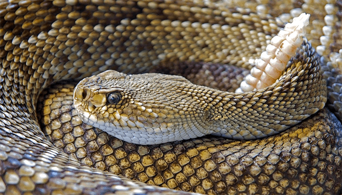 Змеи во сне - к чему снятся?