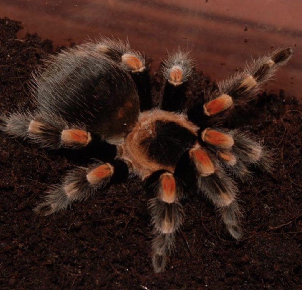К чему снятся пауки - толкование сна по сонникам