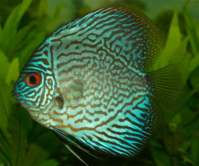 Видеть во сне рыбу - к чему снится сон?