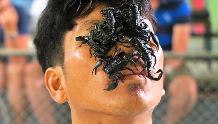 К чему снятся скорпионы? Толкование снов со скорпионом по сонникам