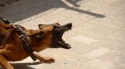 Собака укусила во сне — трактовки, знаки, предостережения