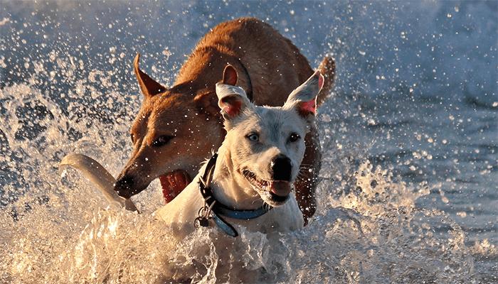 К чему снится собака - толкование по сонникам