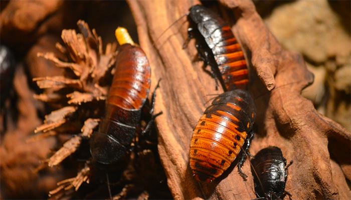 К чему снятся живые тараканы толкования согласно различным сонникам