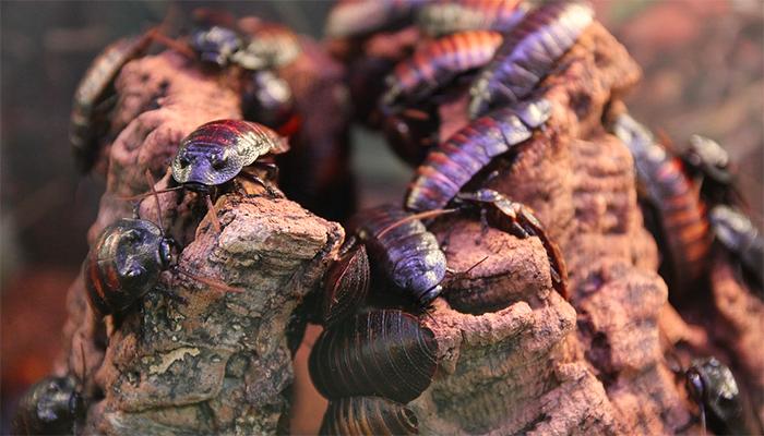 К чему снятся тараканы{q} Толкование снов с тараканом по сонникам