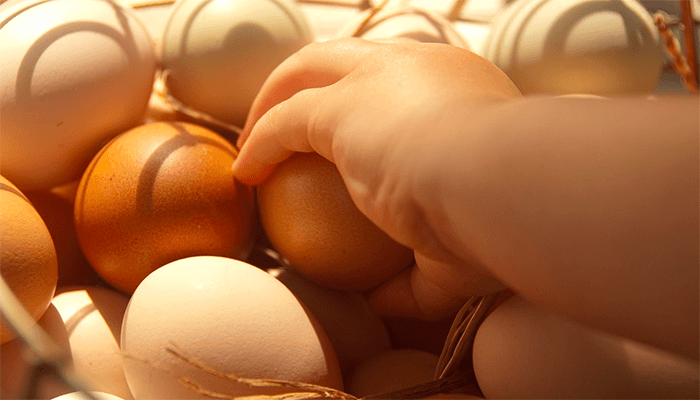 К чему снится куриное яйцо? Подробное толкование сна про куриные яйца
