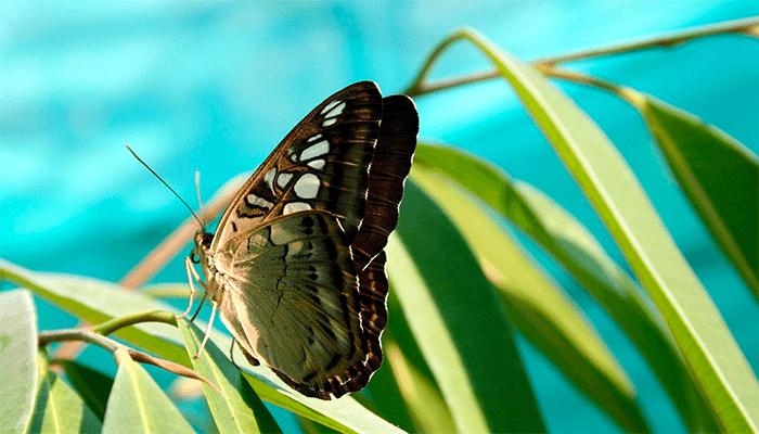 К чему снятся бабочки - толкование сна
