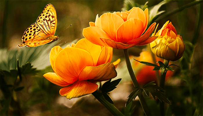 К чему снятся бабочки — толкование сна