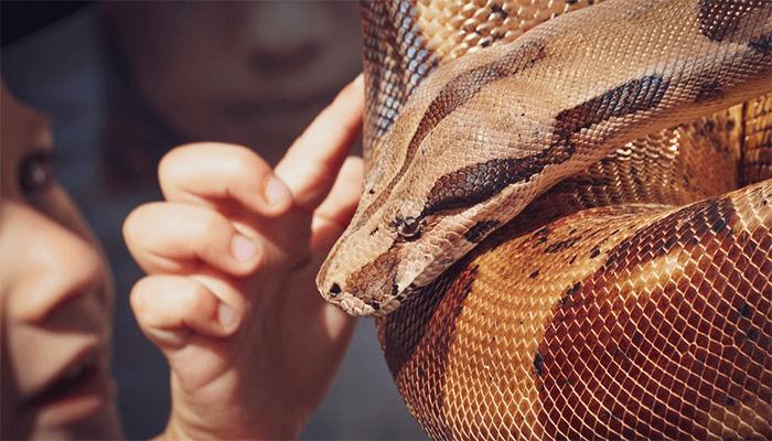 К чему снится большая змея — толкование по сонникам