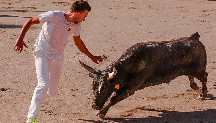 К чему снится черный бык? Толкование снов с черным быком по сонникам