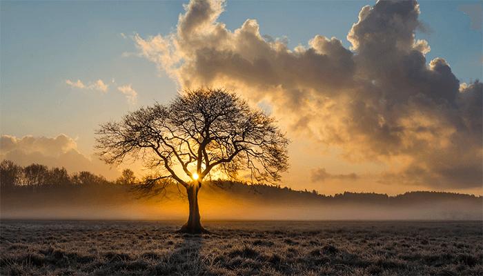 К чему снятся деревья - толкование по сонникам
