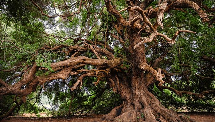 К чему снятся деревья — толкование по сонникам