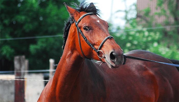 Зачем приходит конь в сон к человеку - толкование сна
