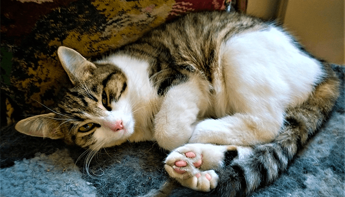 Вам приснилась кошка - что означает такое сновидение?