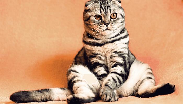 Что приносит кот в жизнь к сновидцу - счастье или неудачи?