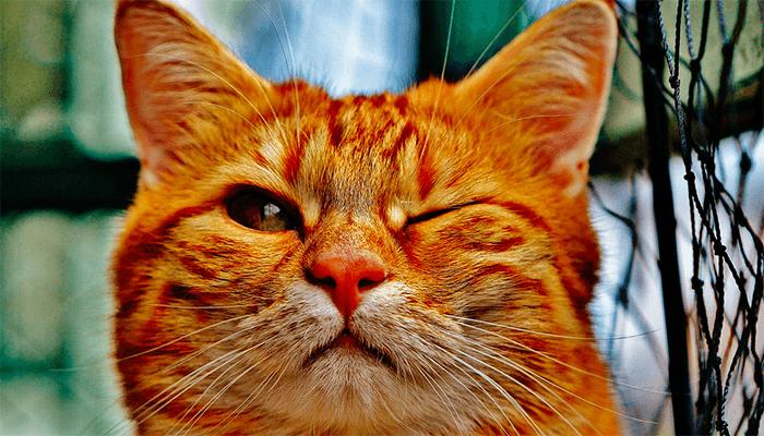 Что приносит кот в жизнь к сновидцу — счастье или неудачи?