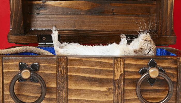 к чему снятся дохлые крысы? Подробное толкование сна