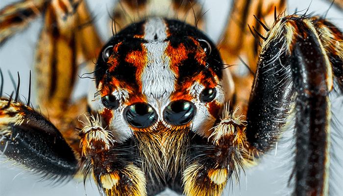 К чему снится большой паук? Подробное толкование по сонникам
