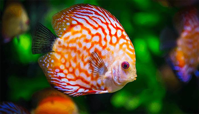 К чему снится рыба в воде - толкование сна по сонникам