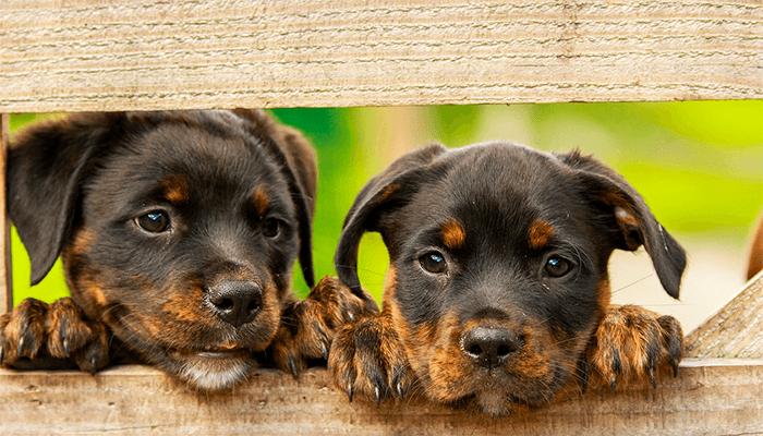 Что предвещает приснившийся щенок?