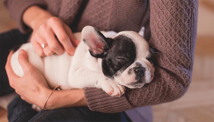 К чему снятся щенки - толкование сна по сонникам