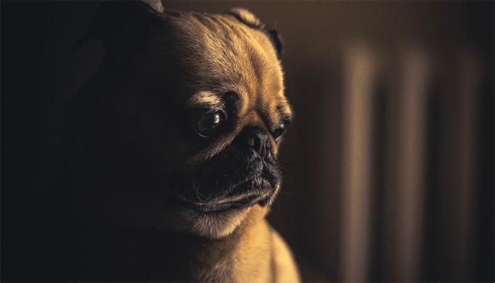 К чему снятся щенки — толкование сна по сонникам