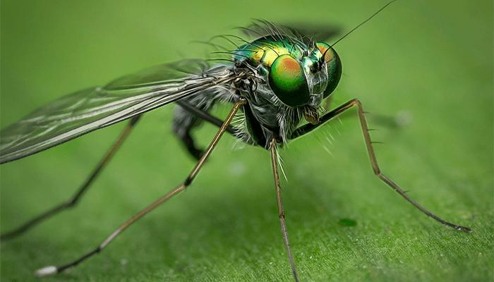 К чему снятся мухи - толкование сна с мушкарой