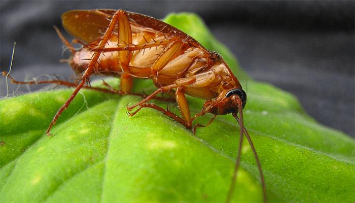 Приснились тараканы к чему это сонник миллера