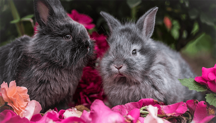 Что предвещают кролики во сне?