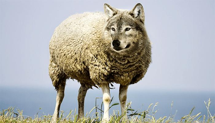 Ночные грезы с образами волка - к чему снится волк, толкование по сонникам