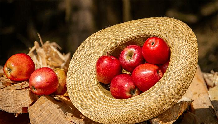 К чему снится яблоко - толкование  яблочного сна по сонникам