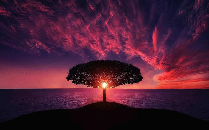 Дерево во сне - толкование