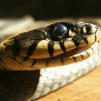 кусает-змея-во-сне