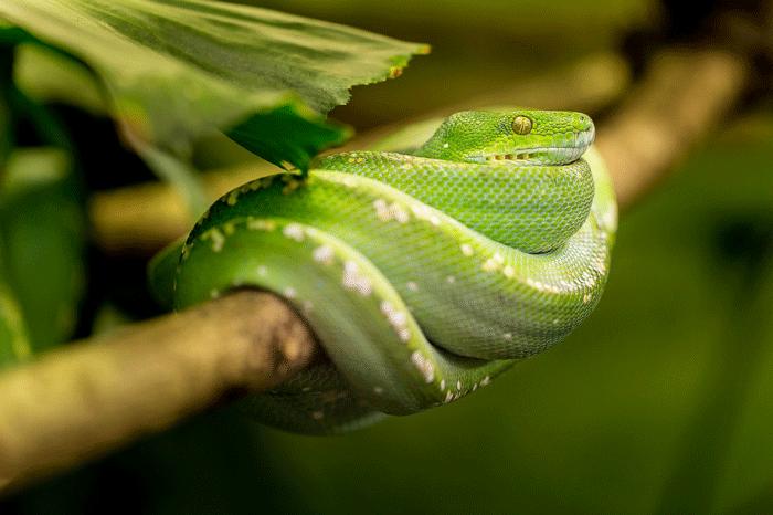 Толкование сновидения о маленьких змеях