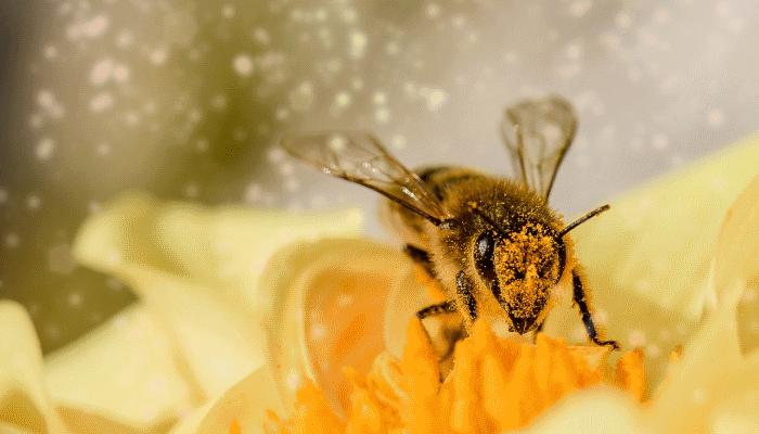 пчела-во-сне-беременной