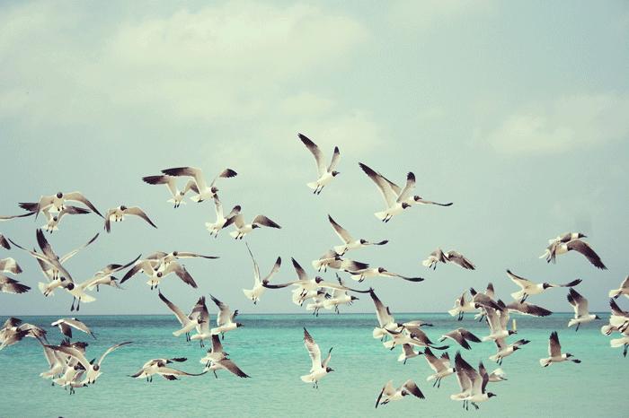 Птица во сне - толкование по сонникам