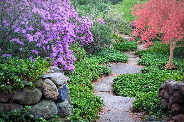 Приснился сад: чего ожидать наяву?