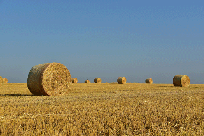 Толкования сновидений о сене