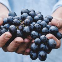 снится-виноград-во-сне