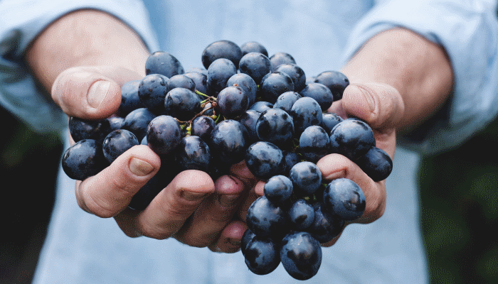 К чему снится виноград — к богатству или хлопотам?